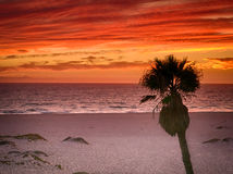 Puesta del sol del rojo anaranjado en la playa de California meridional con la palmera Fotos de archivo