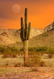 Puesta del sol del Saguaro Foto de archivo libre de regalías