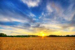 Puesta del sol del trigo Fotos de archivo libres de regalías