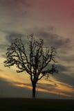 Puesta del sol del valle de Willamette Fotografía de archivo