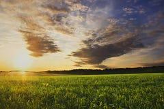 Puesta del sol del verano en el campo de maíz imagen de archivo