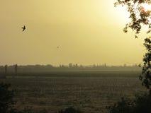 puesta del sol del verano en el sur de Ucrania Imagen de archivo libre de regalías