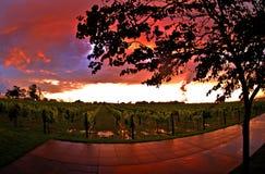 Puesta del sol del viñedo Fotos de archivo