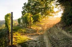 Puesta del sol del viñedo Fotografía de archivo libre de regalías
