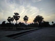 Puesta del sol dentro de las palmeras Fotos de archivo libres de regalías