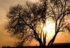 Puesta del sol detrás de árboles foto de archivo