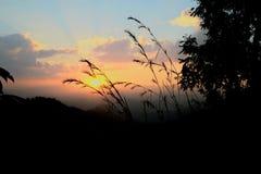 Puesta del sol detrás de las flores de la hierba Foto de archivo