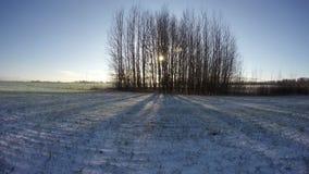 Puesta del sol detrás de los árboles que crecen en el campo del invierno, lapso de tiempo 4K metrajes