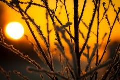 Puesta del sol detrás de ramas en Luvia, Finlandia imágenes de archivo libres de regalías