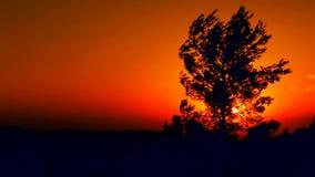 Puesta del sol detrás de un árbol almacen de video