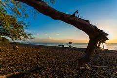 Puesta del sol detrás de un árbol Fotos de archivo libres de regalías