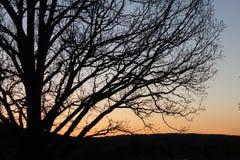 Puesta del sol detrás de un árbol Fotografía de archivo