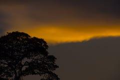 Puesta del sol detrás de un árbol grande Foto de archivo
