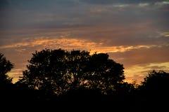 Puesta del sol detr?s del ?rbol foto de archivo libre de regalías