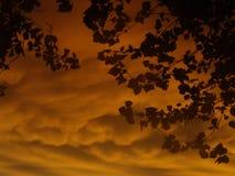 Puesta del sol dramática con las hojas Imagen de archivo