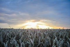 Puesta del sol dramática sobre campo Fotos de archivo libres de regalías