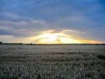 Puesta del sol dramática sobre campo Foto de archivo libre de regalías