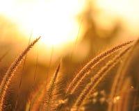 Puesta del sol e hierba Foto de archivo libre de regalías