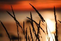 Puesta del sol e hierba Fotos de archivo libres de regalías