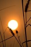Puesta del sol e hierba imagen de archivo