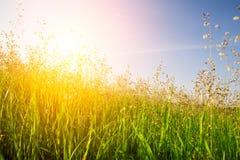 Puesta del sol e hierba imagenes de archivo