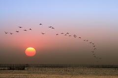 Puesta del sol, el volar de los pájaros Fotografía de archivo libre de regalías