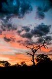 Puesta del sol en África Imágenes de archivo libres de regalías