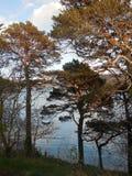 Puesta del sol en árboles de pino en la bahía de Portree Foto de archivo libre de regalías
