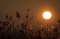 Puesta del sol en Amara imagen de archivo libre de regalías