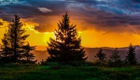 Puesta del sol en arbolado Fotografía de archivo libre de regalías