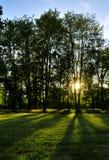 Puesta del sol en bosque fotografía de archivo libre de regalías