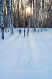 Puesta del sol en bosque Imagen de archivo libre de regalías