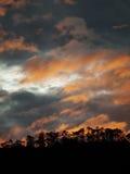 Puesta del sol en bosque Imagenes de archivo