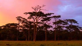 Puesta del sol en bosque Imagen de archivo