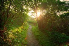 Puesta del sol en bosque foto de archivo