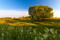 Puesta del sol en bosque de la primavera Foto de archivo libre de regalías