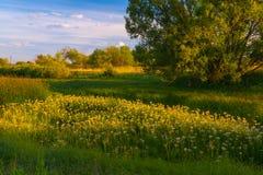 Puesta del sol en bosque de la primavera Fotos de archivo libres de regalías