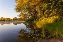 Puesta del sol en bosque de la primavera Imagen de archivo libre de regalías