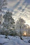 Puesta del sol en bosque del abedul Fotos de archivo libres de regalías