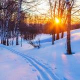 Puesta del sol en bosque del invierno Fotos de archivo libres de regalías