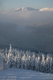 Puesta del sol en bosque del invierno Fotografía de archivo