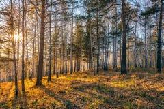 Puesta del sol en bosque del otoño. Imagen de archivo libre de regalías