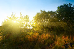 Puesta del sol en bosque del otoño imagenes de archivo