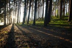 Puesta del sol en bosque del parque nacional Imágenes de archivo libres de regalías