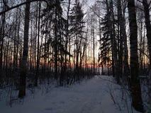 Puesta del sol en bosque del invierno Fotos de archivo