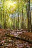 Puesta del sol en bosque del otoño Foto de archivo libre de regalías