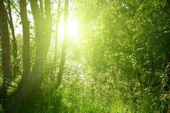 Puesta del sol en bosque profundo Fotografía de archivo