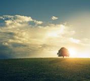 Puesta del sol en campo herboso. fotografía de archivo libre de regalías