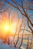 Puesta del sol en costa del pequeño río escarchado en montante del instagram del bosque Imagenes de archivo