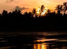 Puesta del sol en costa tropical con las palmas Foto de archivo libre de regalías